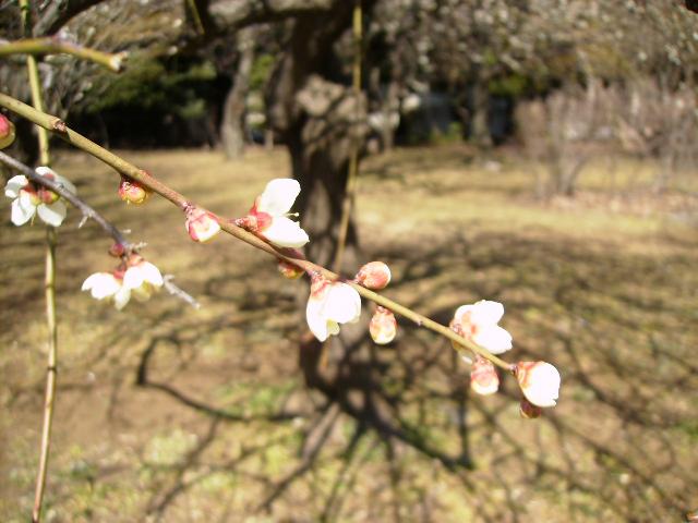 春の訪れ_d0079147_1836280.jpg