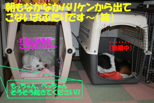 f0121712_1047849.jpg