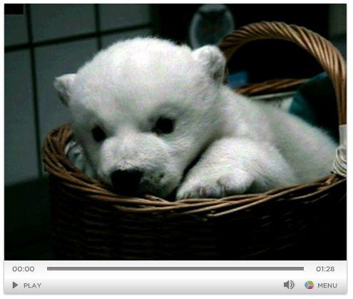 シロクマの赤ちゃん_c0025115_9335249.jpg