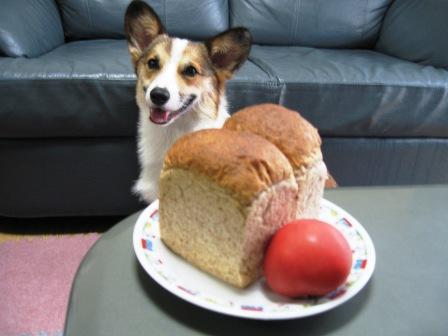 yummy のパン①_f0155118_22114610.jpg