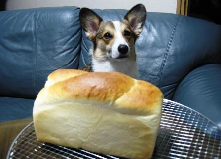 yummy のパン①_f0155118_22372190.jpg
