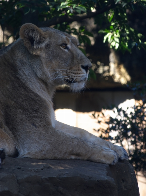 上野動物園 1_f0018464_19501263.jpg