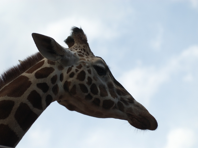 上野動物園 1_f0018464_19503224.jpg