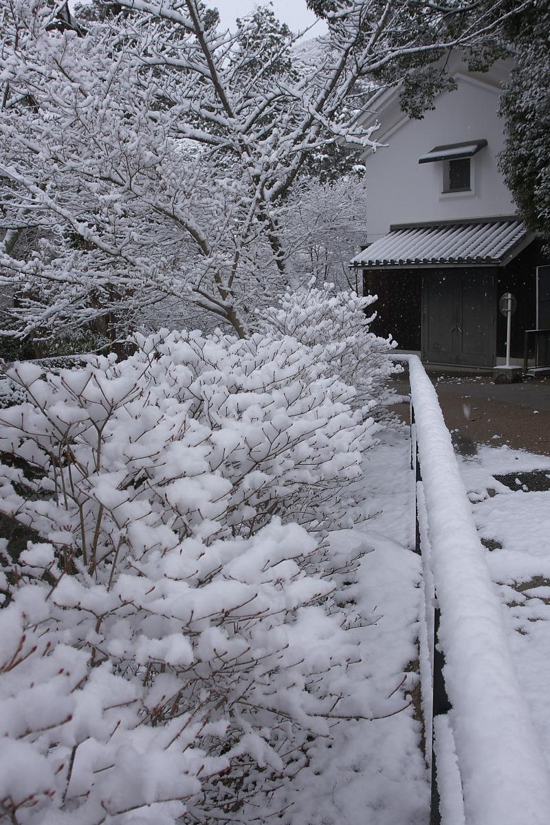 京都 雪景色 <東山> 1_f0021869_16121690.jpg