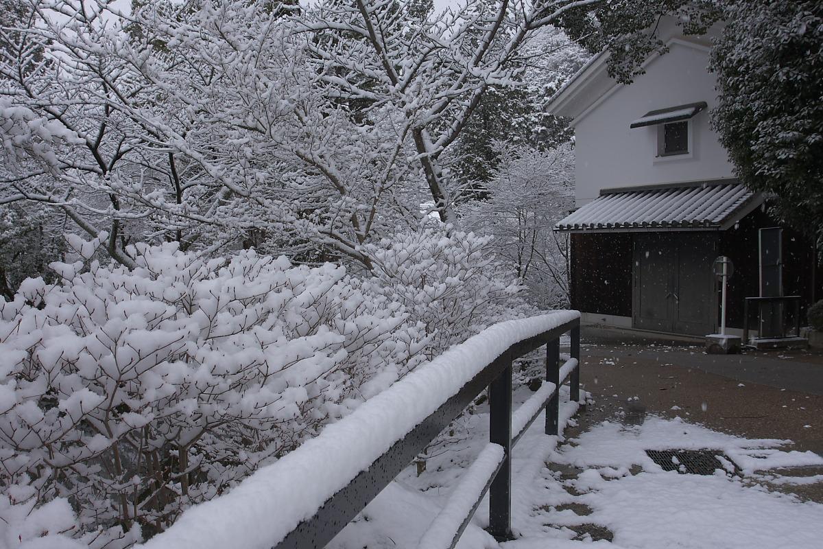 京都 雪景色 <東山> 1_f0021869_1613416.jpg
