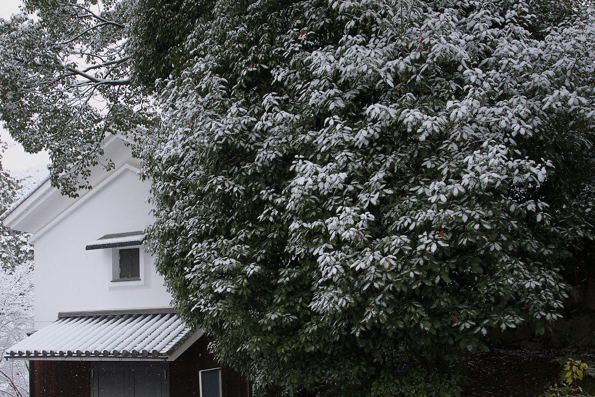 京都 雪景色 <東山> 1_f0021869_16144766.jpg