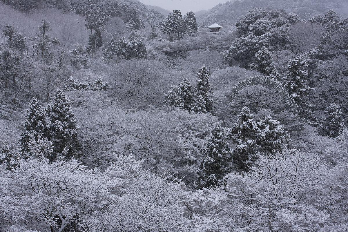 京都 雪景色 <東山> 2_f0021869_1633680.jpg