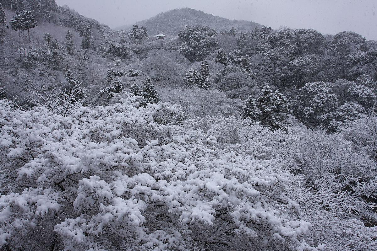 京都 雪景色 <東山> 2_f0021869_163426100.jpg