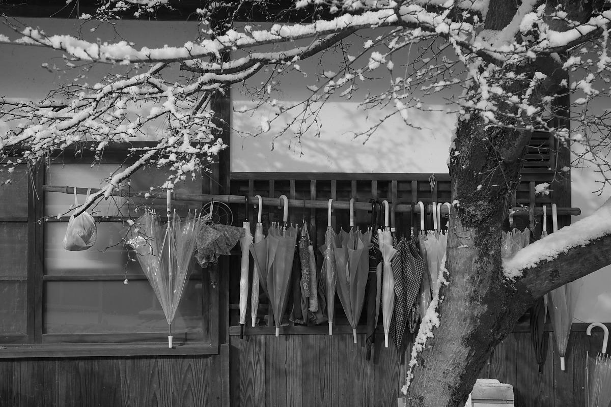 京都 雪景色 <東山> 1_f0021869_1692860.jpg