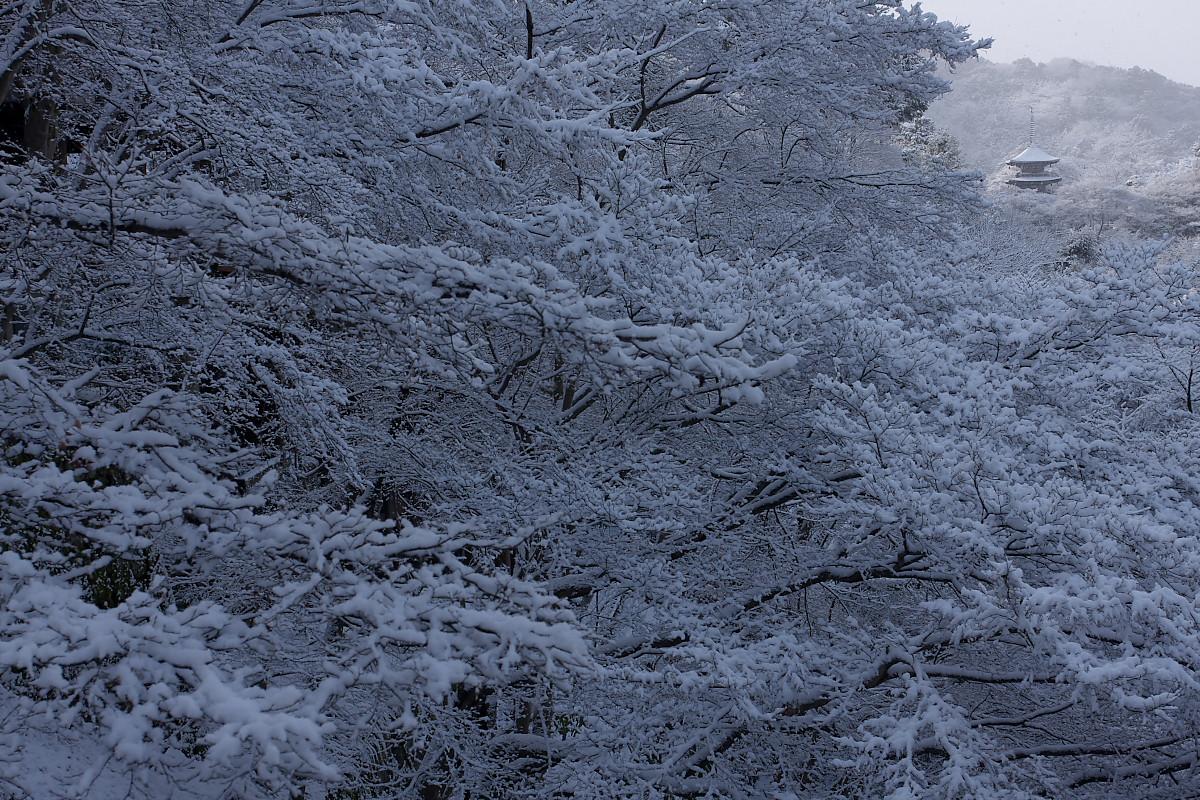 京都 雪景色 <東山> 5_f0021869_174344.jpg