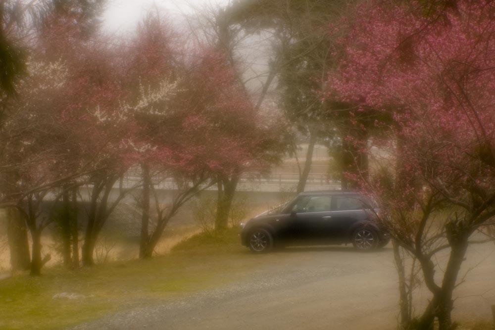 春を探しに_c0150383_19462812.jpg