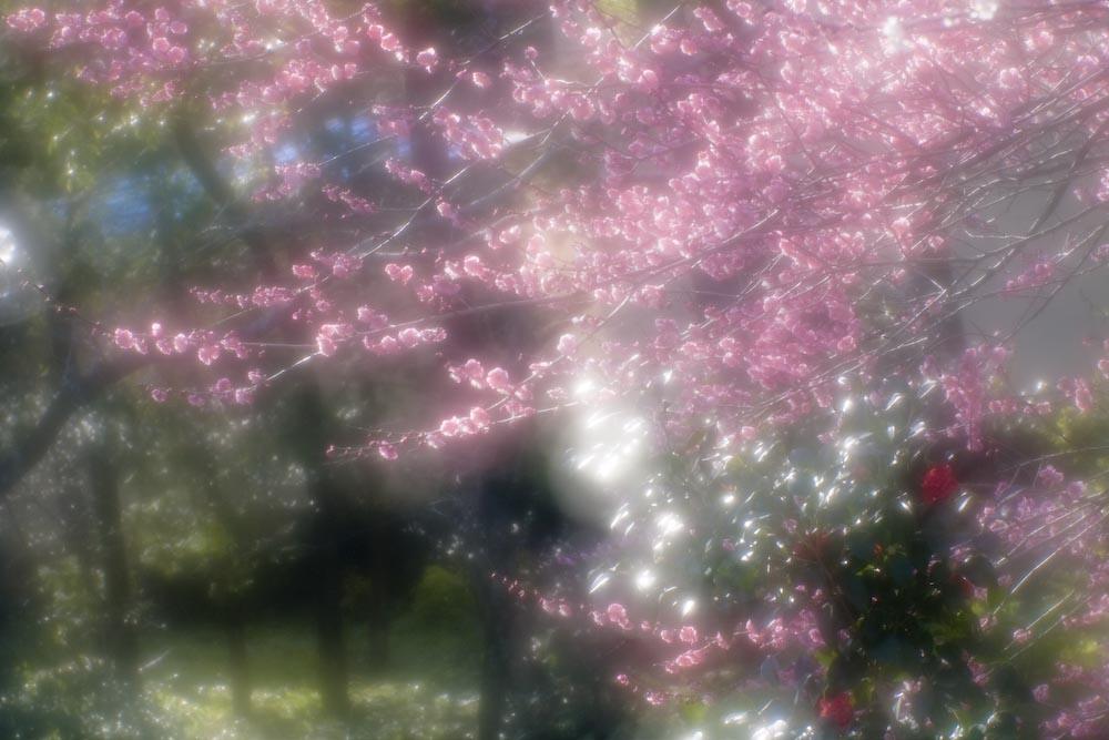 春を探しに_c0150383_1950553.jpg