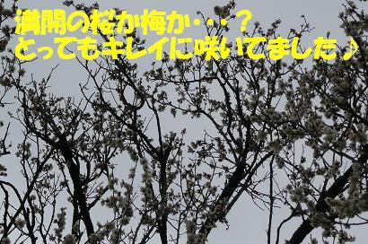 f0121712_2217045.jpg