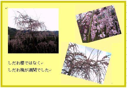 和歌山 南部(みなべ)梅林へ _a0084343_14364285.jpg