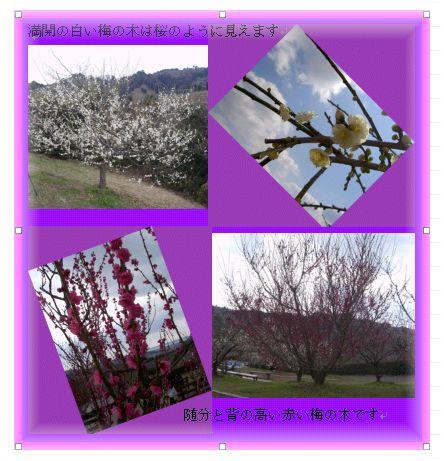 和歌山 南部(みなべ)梅林へ _a0084343_14371263.jpg