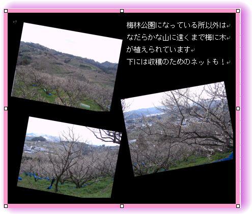 和歌山 南部(みなべ)梅林へ _a0084343_14374061.jpg