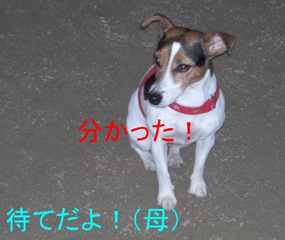 f0053952_16542480.jpg