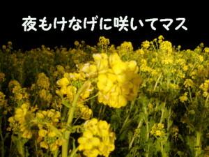 f0145192_16314462.jpg