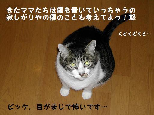 f0081100_21134533.jpg
