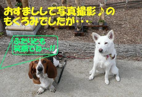 f0121712_1013236.jpg