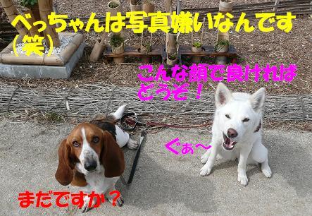f0121712_101396.jpg