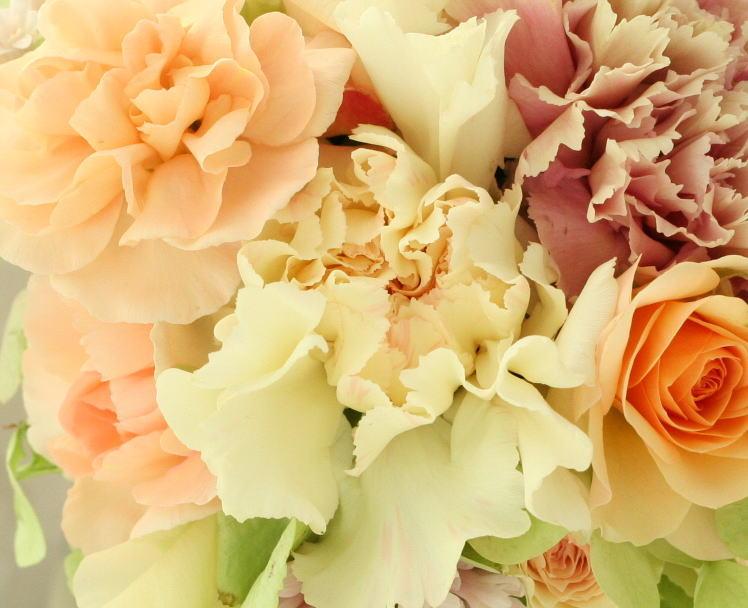 なぜ花を美しいと思うのか_a0042928_22445193.jpg