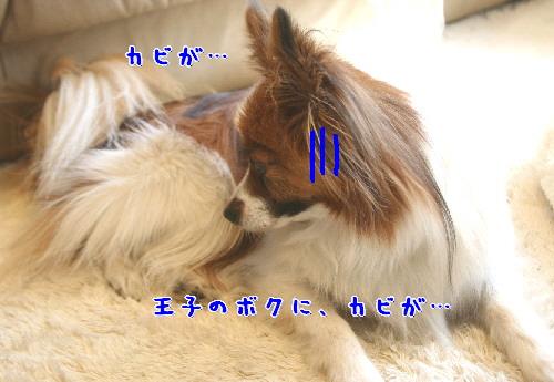 d0013149_8525725.jpg