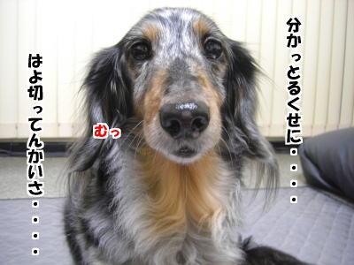 d0020869_1374557.jpg