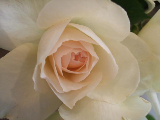 オークリーフ(春、ミモザの季節)_f0049672_14355966.jpg
