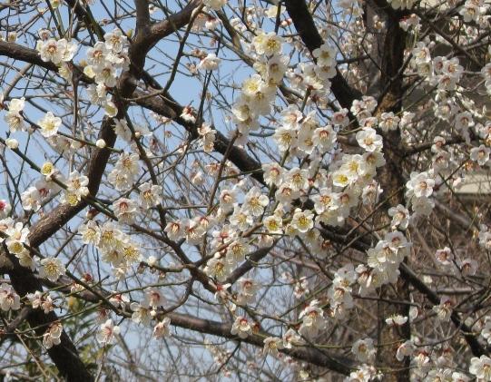 春ですね!_c0052576_19135766.jpg