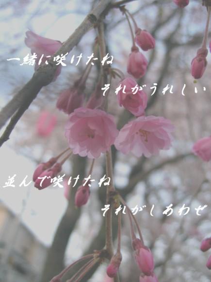 f0156895_0422573.jpg