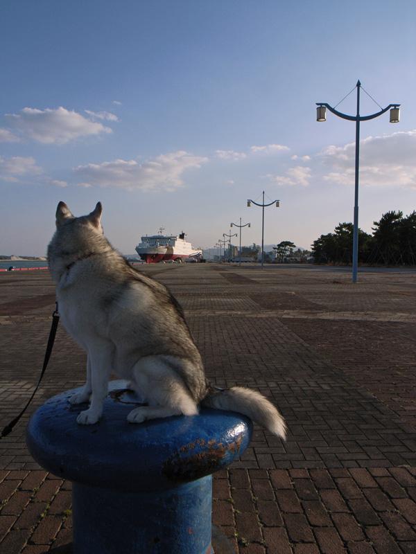 港で待つ女_c0049299_2057565.jpg