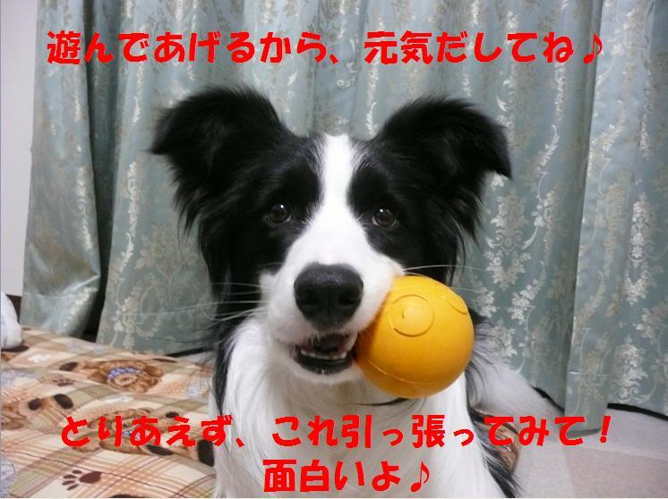 c0147241_1512262.jpg