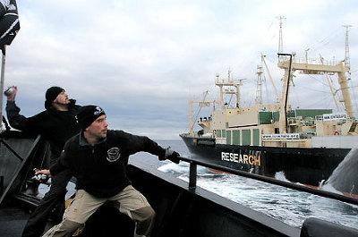 調査捕鯨船妨害で日本人三人負傷_a0103951_23115427.jpg