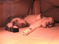 懐かし猫・迫力猫・(駄猫)_d0028589_18565184.jpg