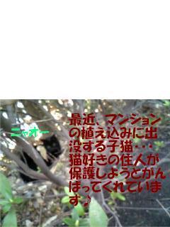 f0121712_10305015.jpg