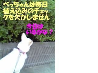 f0121712_103104.jpg
