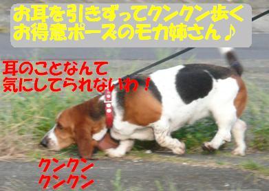 f0121712_10361553.jpg