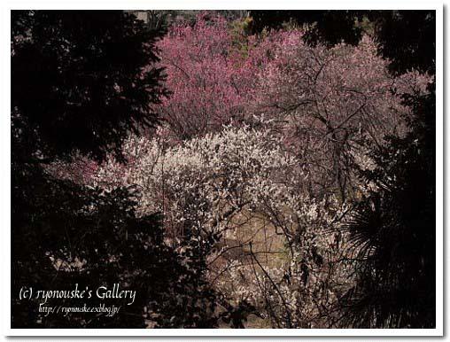 春を感じて。。。_f0031022_0152392.jpg