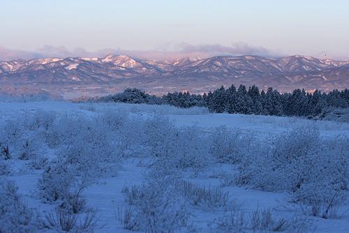 ふわふわ雪の朝_a0087133_6583151.jpg
