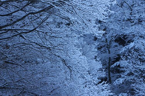 ふわふわ雪の朝_a0087133_658816.jpg