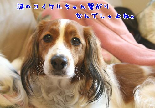 d0013149_100158.jpg
