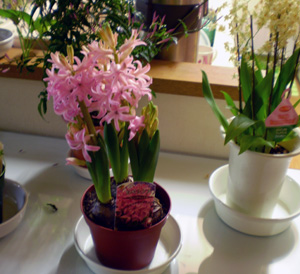 もうすぐ春ですね!_c0151053_2315128.jpg