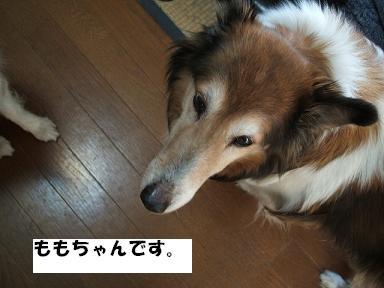 f0046854_208051.jpg