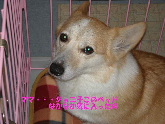 a0085464_21413591.jpg
