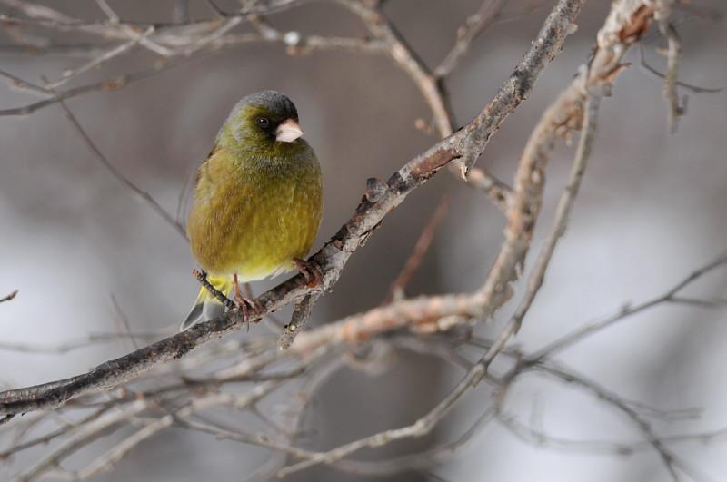 コガラと他の鳥さん_f0053272_1314026.jpg