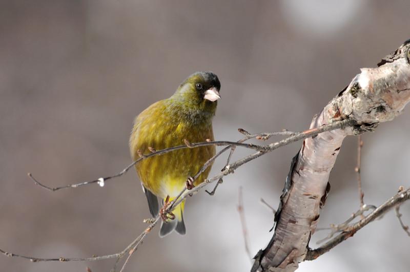 コガラと他の鳥さん_f0053272_13144781.jpg