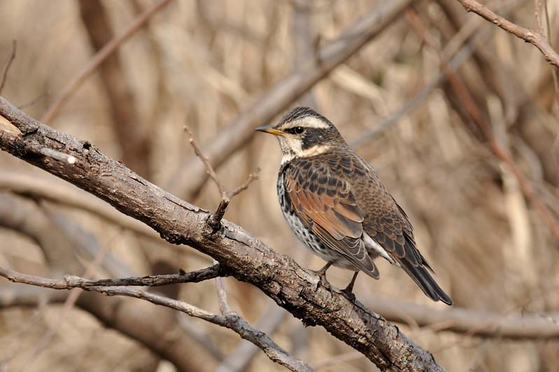 コガラと他の鳥さん_f0053272_1321554.jpg