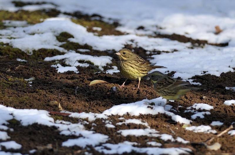 コガラと他の鳥さん_f0053272_1395272.jpg