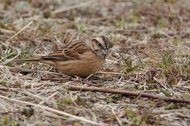 コガラと他の鳥さん_f0053272_14234345.jpg